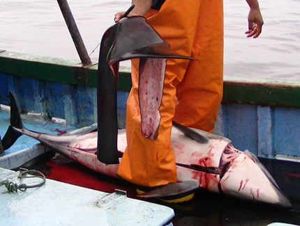 Peruvian Government Prosecutes Dolphin Killers