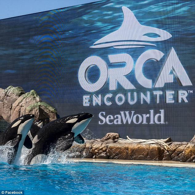 News seaworld s farcical natural encounter with for Farcical behavior