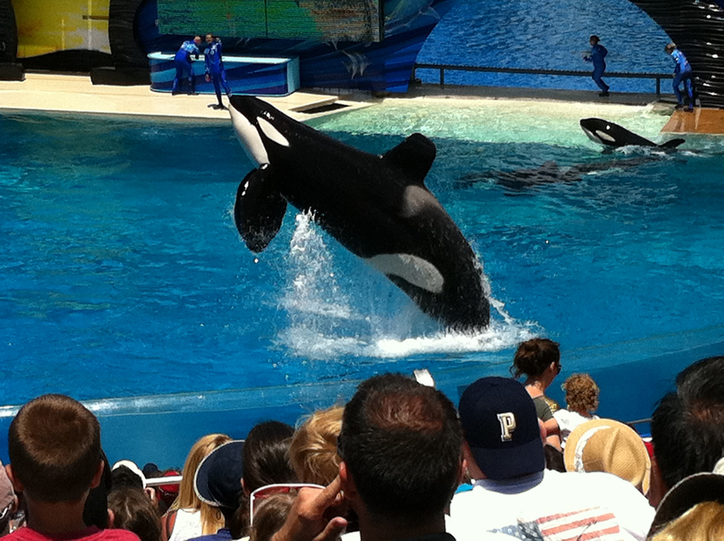 Court Denies SeaWorld's Fourth Attempt To Terminate Class Action Lawsuit