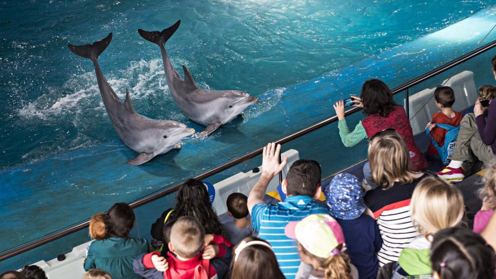 Barcelona Shutting Down Its Dolphinarium!
