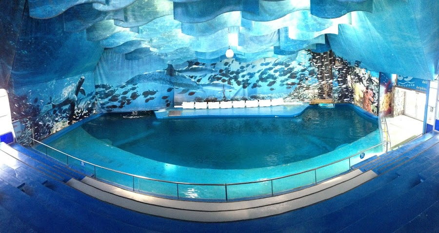 News Barcelona Considers Shutting Down Dolphinarium And Retiring