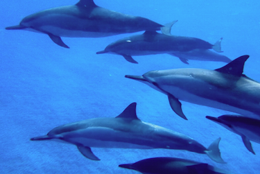 The Lives of Wild Dolphins