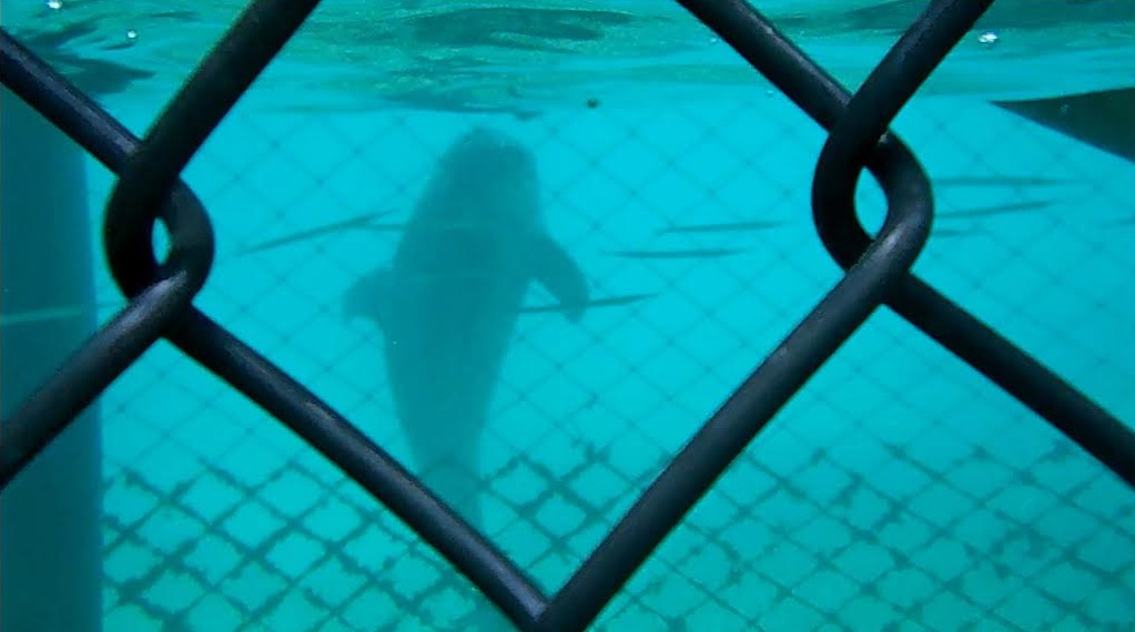 Help Close Illegal Dolphinarium in  Bahamas