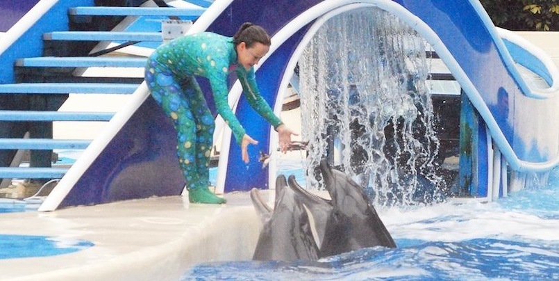 SeaWorld Connects to Taiji Through Association of Trainers