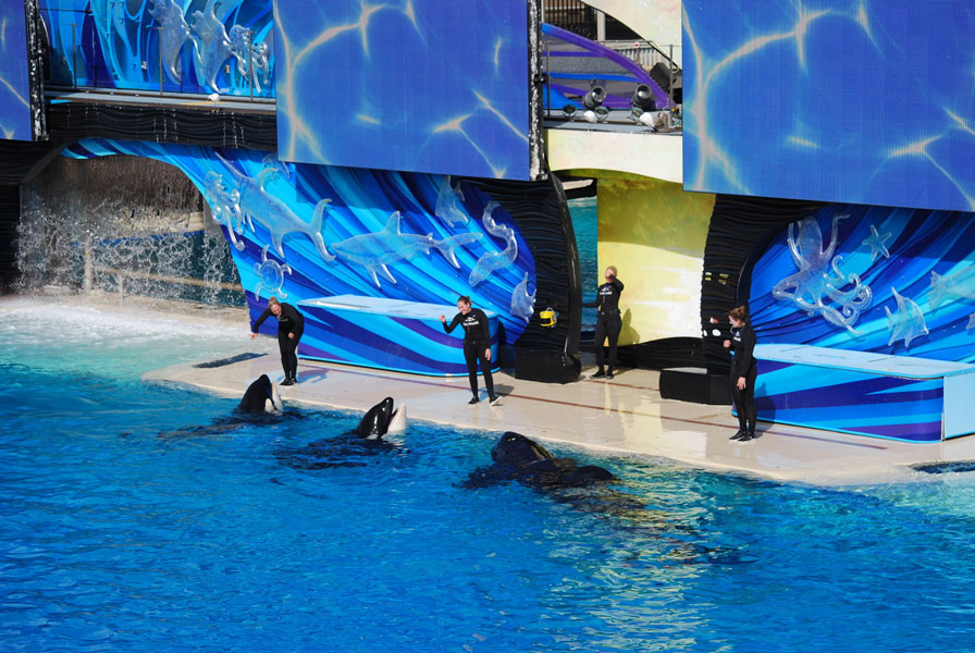 how much does a seaworld dolphin trainer make