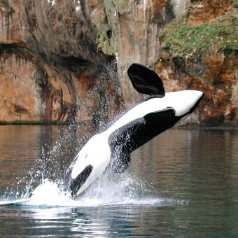 SeaWorld Claims that Sanctuaries Don't Work. We're Going To Prove Them Wrong, Again.