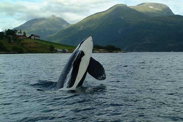 News seaworld refuses orca retirement to keep making money off of news seaworld refuses orca retirement to keep making money off of them international marine mammal project voltagebd Gallery