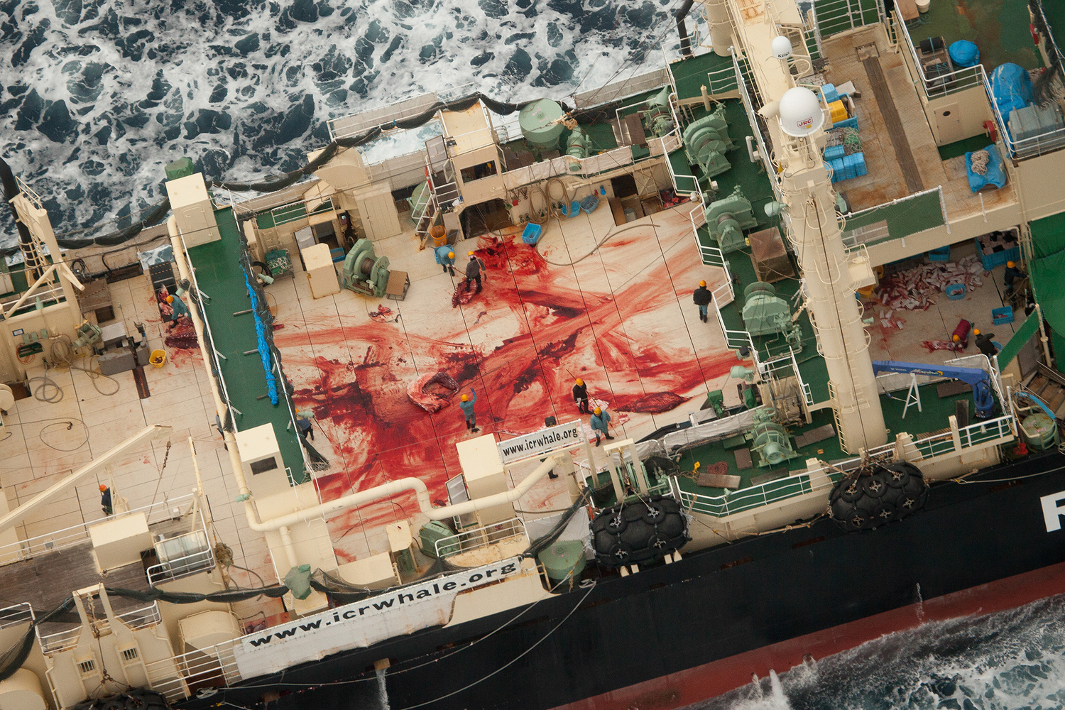 IWC Rejects Japan's Push For Commercial Whaling