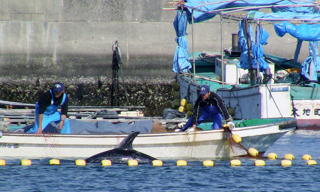 Frequently Asked Questions About The Taiji Dolphin Slaughters