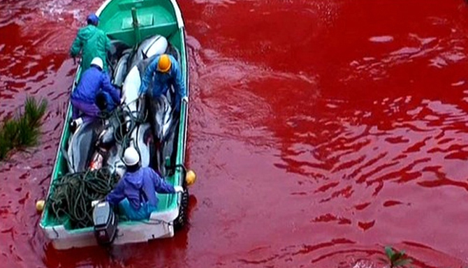Killing Quota Raised Again By Japan Fisheries Agency