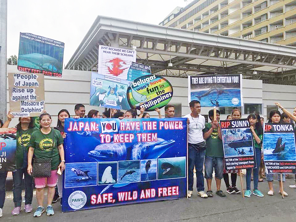 Dolphin Hunting Season Opens With Protests in Japan and Around the World