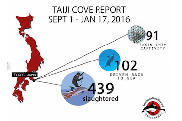 Check the status of the Taiji dolphin killing through early 2016