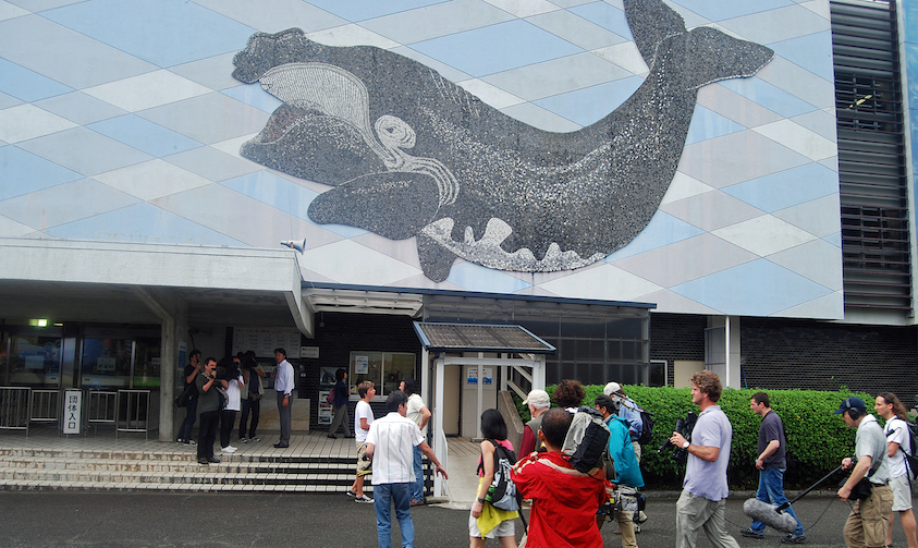 Dolphinariums in Japan Insist on Sourcing from Taiji