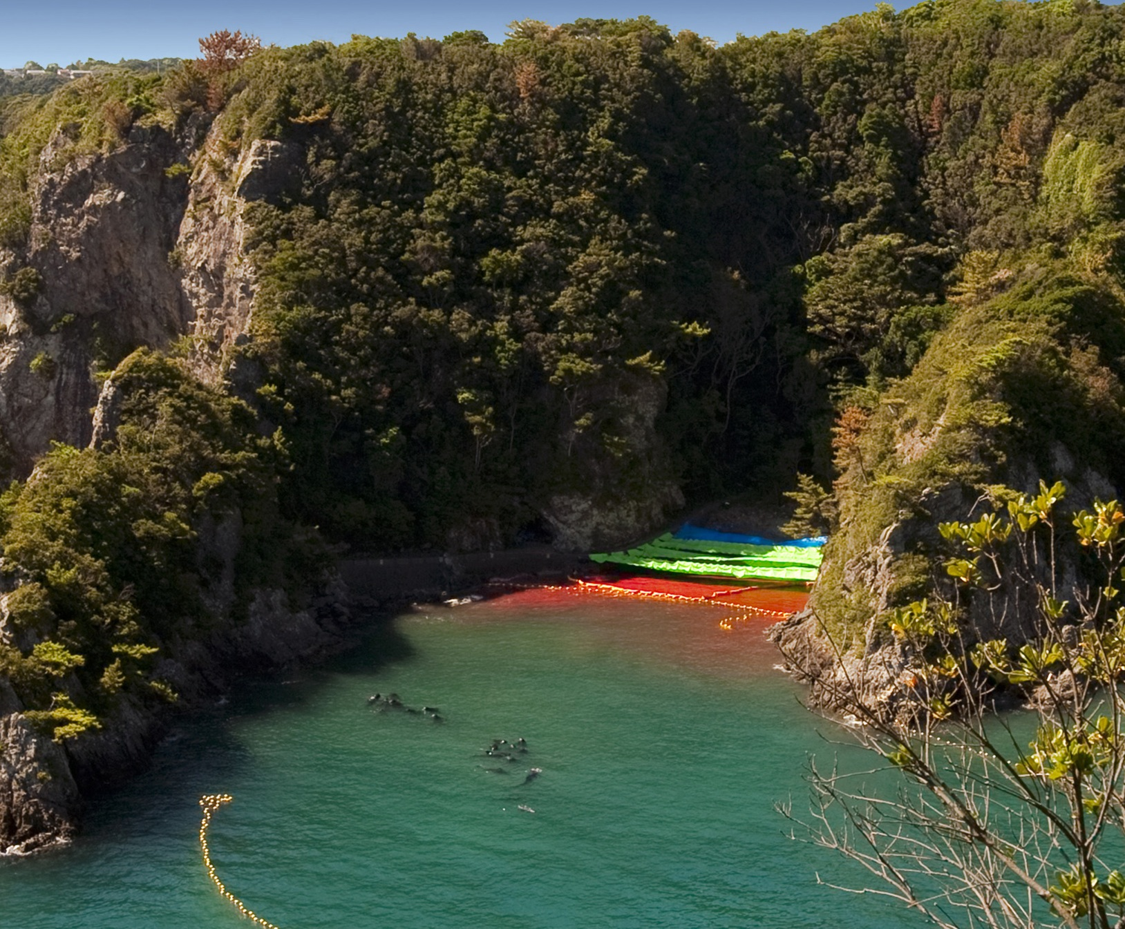 Taiji Given Green Light to Kill More Dolphins